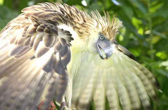 Phil-Eagle-04_WEB-580x380